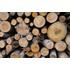 Holz- und Möbelindustrie