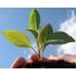 Alternative landwirtschaft weltweit