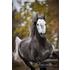 Reitimmobilien - Immobilien für Pferdefreunde!