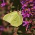 Wunder der Natur - Flora und Fauna
