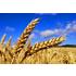 Agrar- & Landwirtschaft (Familienbetrieb bis Aktiengesellschaft)
