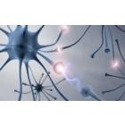 Neurowissenschaft für Unternehmen & Organisationen