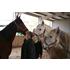 Akademie für pferdegestütztes Team- und Führungstraining