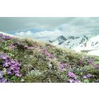 Berglauf und Trailrunning