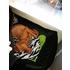 Der Hund im Büro - Pro Bürohund