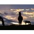 Pferde Pferdezucht und Reiten