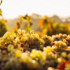 Deutscher Wein - Weine aus Deutschland